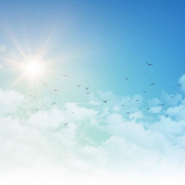 Group of birds flying through clouds